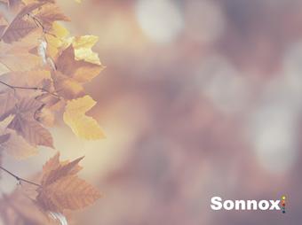 Sonnox 50% taniej